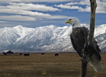 Eagles-and-Agriculture