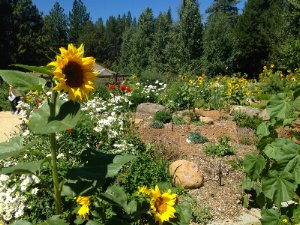 Lake of the Sky Truckee Garden Tour