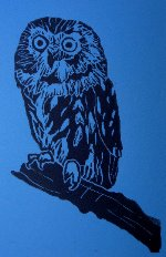 Michelle Murdock Owl