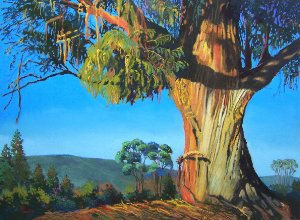 Gigantic Beauty Eucalyptus by Bonita Paulis