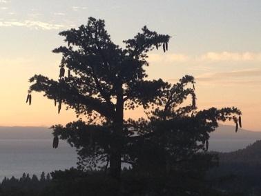 Sugar Pine Foundation hike