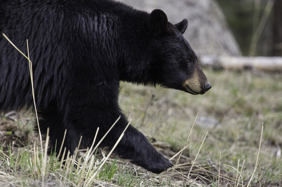 lake tahoe wildlife care