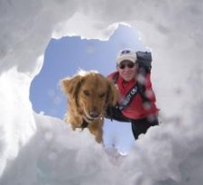 ski patrol dog in snow